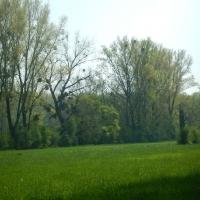 Wanderung am Altrhein, Führung Haus Bürgel